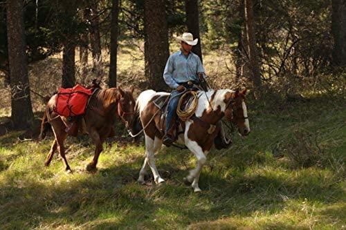 51FIDG3Zi8L. AC  - TrailMax Saddle Panniers