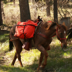 f4dd5e7f ec72 4a7d 8efb 22e5ae53ae9e.  CR0,0,300,300 PT0 SX300 V1    - TrailMax Saddle Panniers