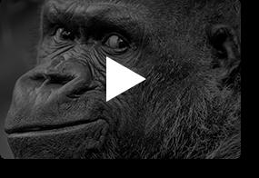video - BORDER - A Delightful Photography WordPress Theme