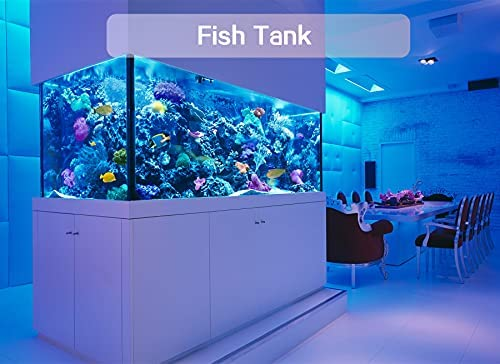 51O5PFyn77S. AC  - Waterproof Submersible Led Pool Lights Underwater, 16 Colors Pond Lights with Remote, Suction Cups & Magnet, Halloween Decor Lamp for In-ground Pool Bathtub Fish Tank Christmas Decor Lights (4 Pack)