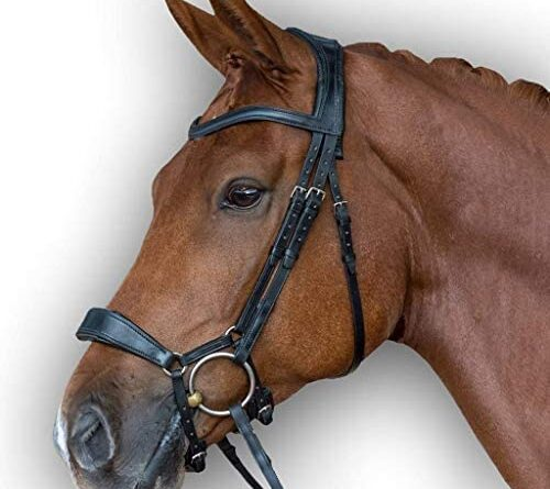 1635329379 51wCTMdDf6L. AC  500x445 - Leather Premium Shaped Padded Bridle for Horses | Available in Multiple Sizes & Colors